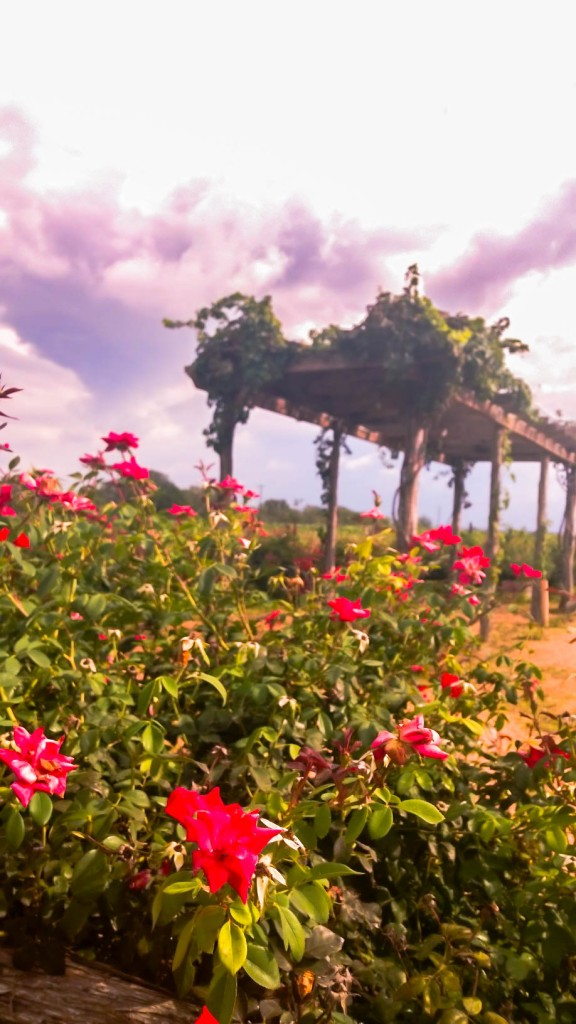 Texas Wine Country, outside of Fredericksburg