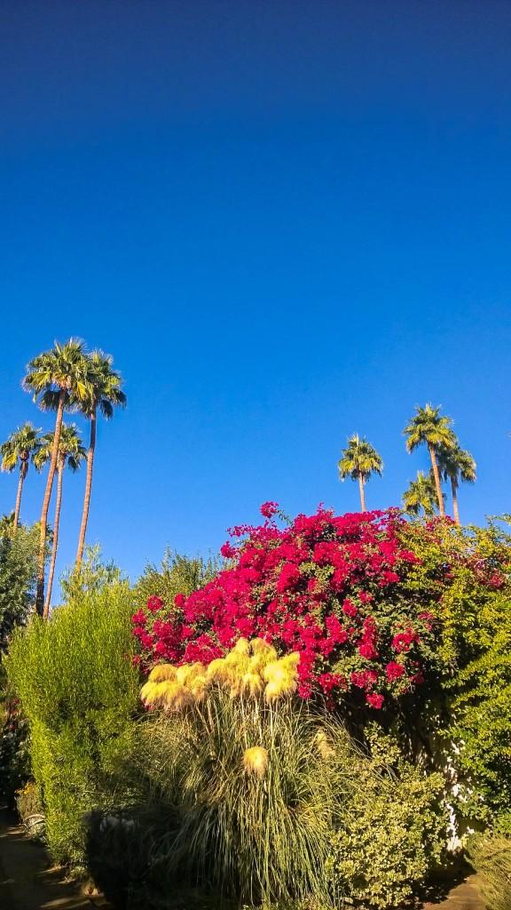 Parker Palm Springs-8
