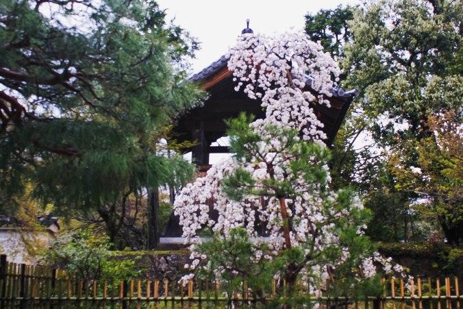 Arashiyama 22