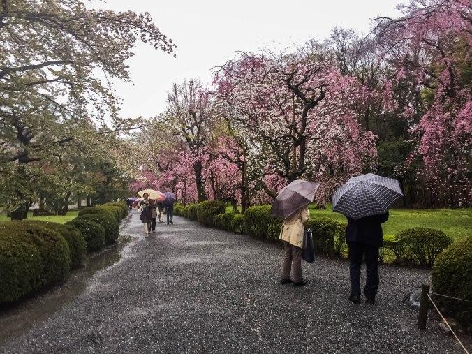 Arashiyama and Nijo Castle Kyoto (2)