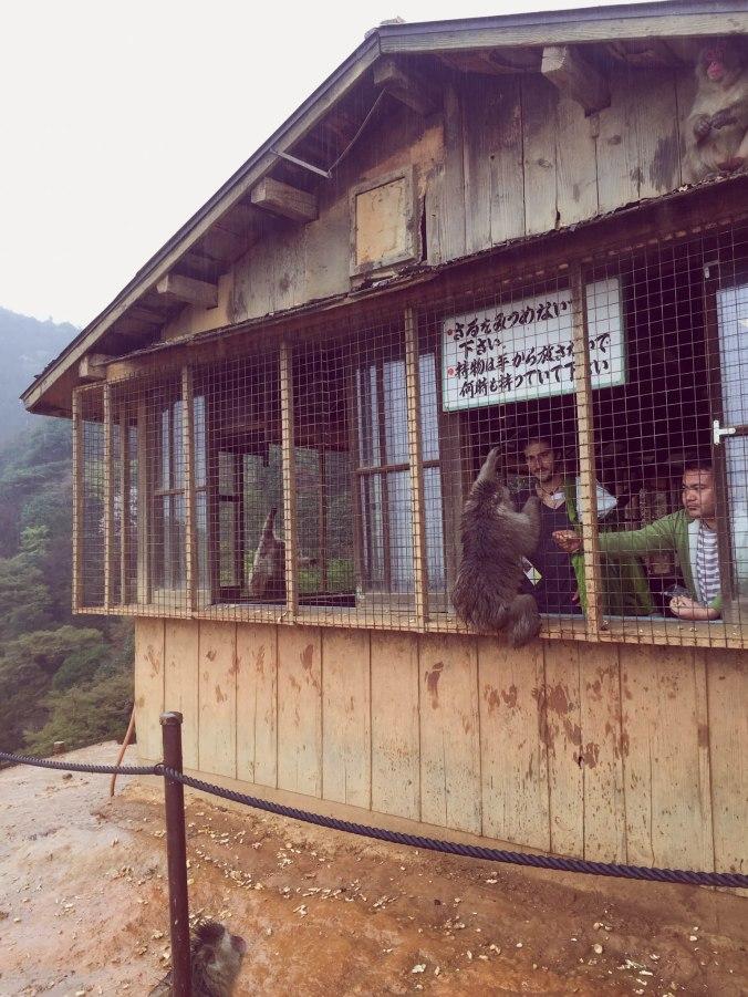 Arashiyama Monkeys and Bamboo Forest Kyoto (101 of 5)