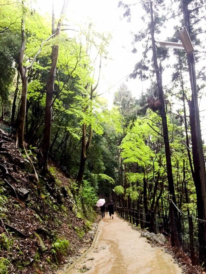 Arashiyama Monkeys and Bamboo Forest Kyoto (104 of 5)