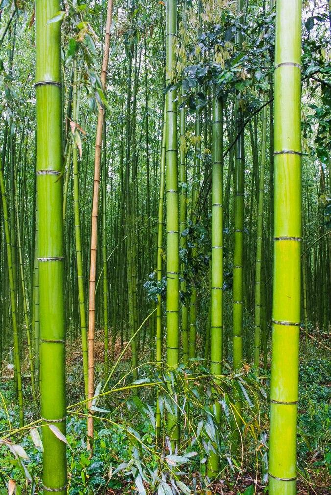 Arashiyama Monkeys and Bamboo Forest Kyoto (13 of 34)