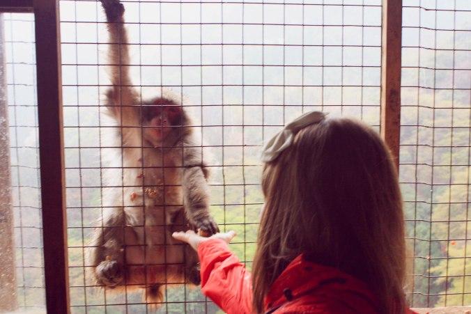 Arashiyama Monkeys and Bamboo Forest Kyoto (15 of 34)
