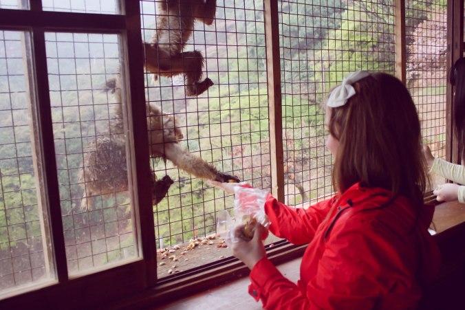 Arashiyama Monkeys and Bamboo Forest Kyoto (18 of 34)