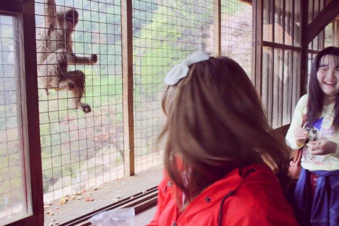 Arashiyama Monkeys and Bamboo Forest Kyoto (20 of 34)