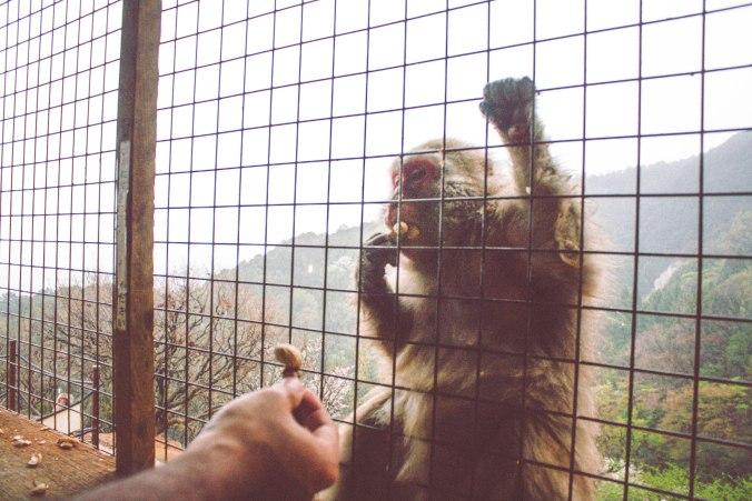 Honeymoon in Kyoto Japan: Arashiyama Bamboo Forrest & Monkey Park Iwatayama