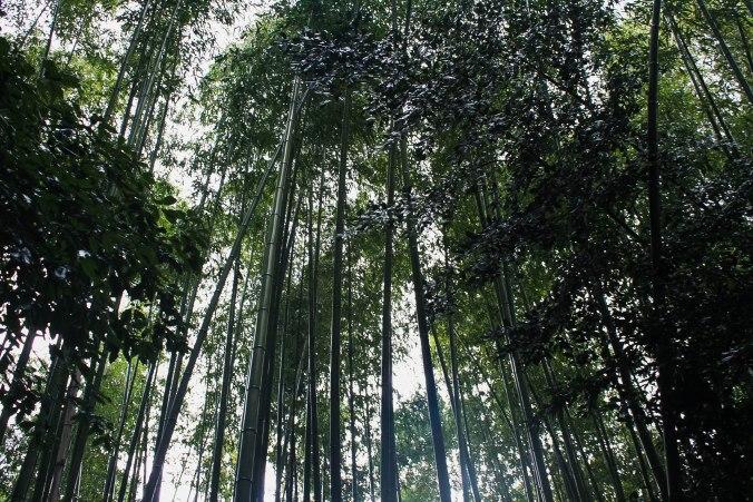 Arashiyama Monkeys and Bamboo Forest Kyoto (7 of 34)