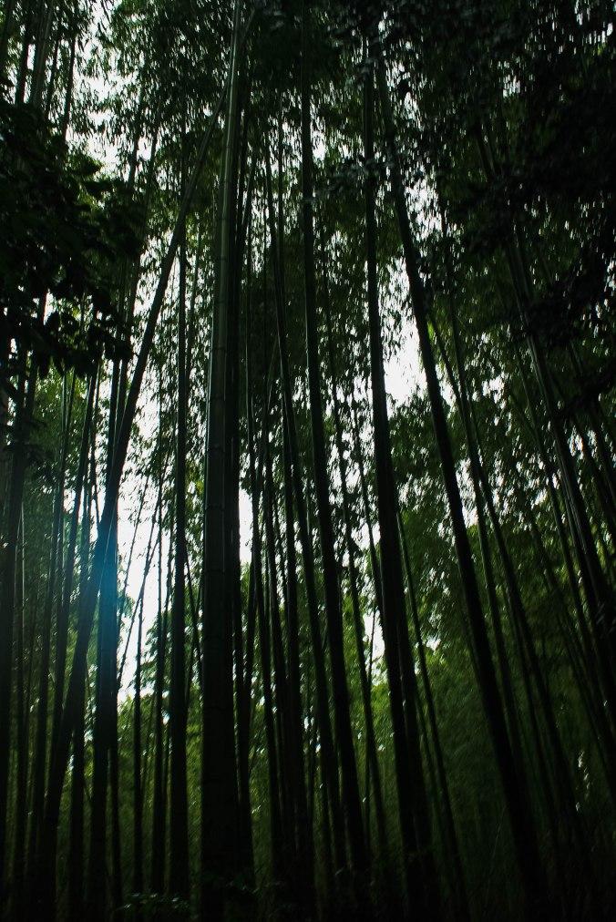 Arashiyama Monkeys and Bamboo Forest Kyoto (8 of 34)