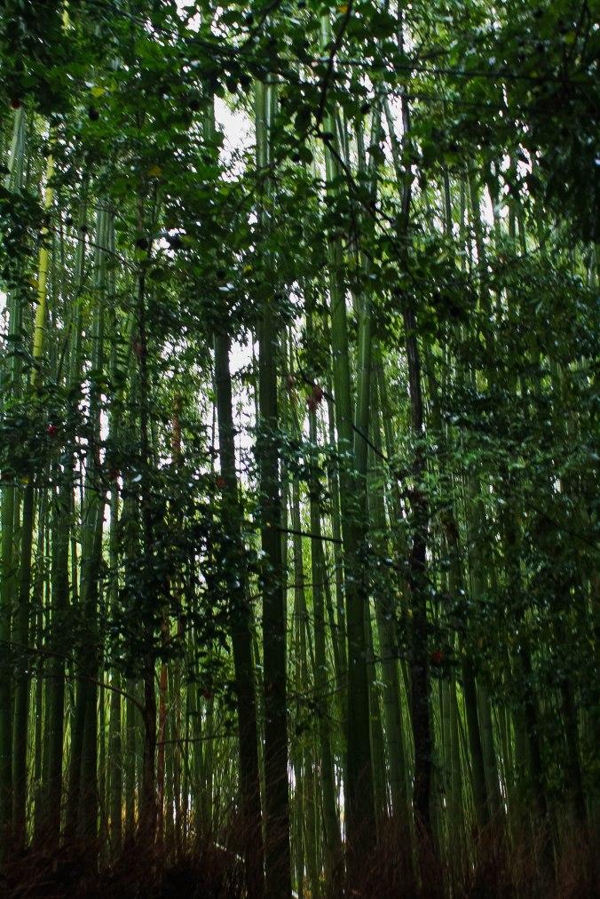 Arashiyama Monkeys and Bamboo Forest Kyoto (9 of 34)