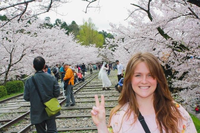 cherry blossom season kyoto Tiny Kelsie