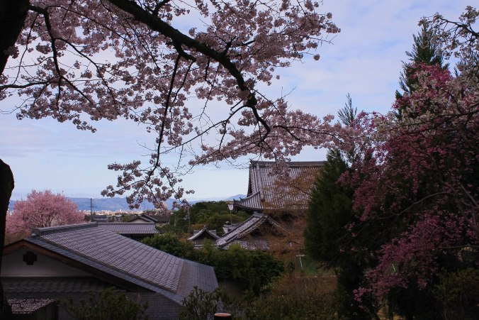 cherry blossoms philospher's path romantic kyoto 4