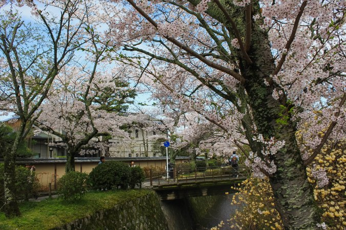 cherry blossoms philospher's path romantic kyoto 14