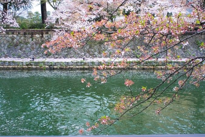 Kaiseki-ryori (3 of 14)