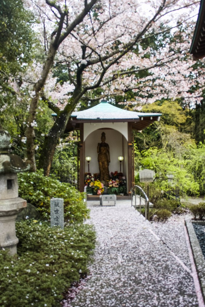 Shinto God of Rice, Tea Ceremony, Traditonal Japanese meal (25 of 35)