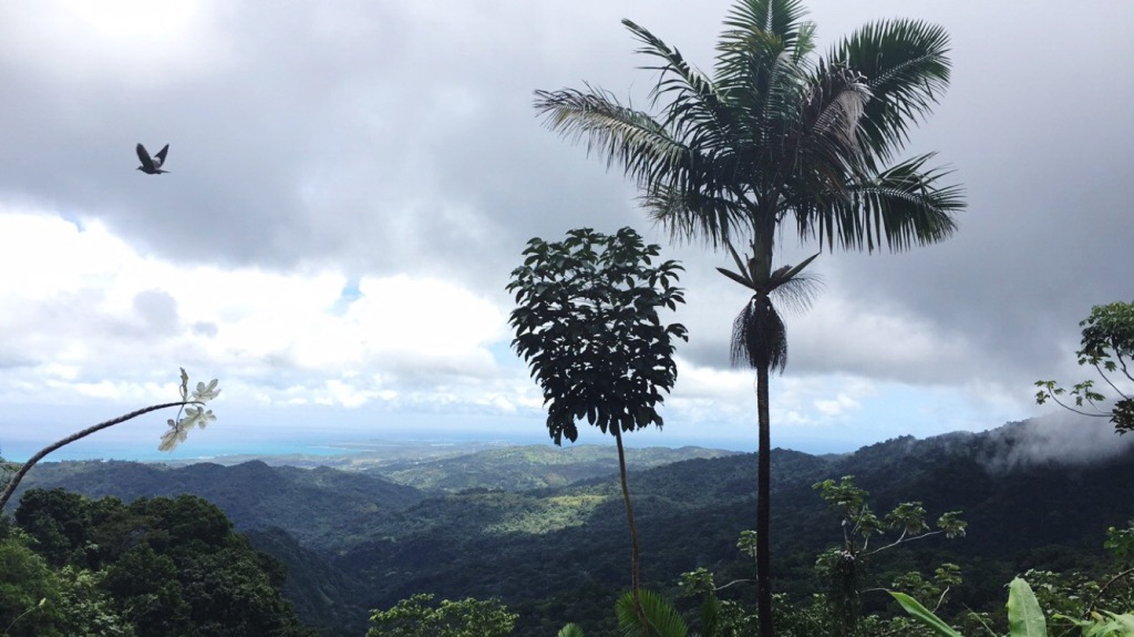 Birwatching in El Yunque National Forest in Puerto Rico