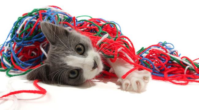 cat wrapped in yarn.jpg