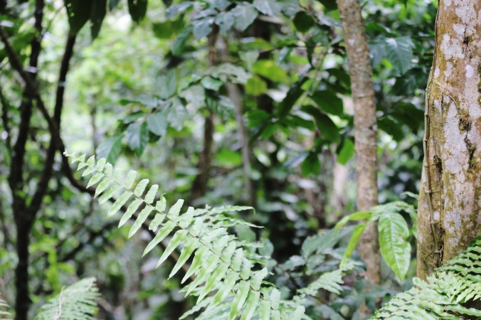 Jungle in the Rainforest of El Yunque National Forest in Puerto Rico