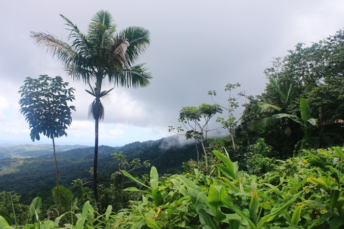 View from Yokahu Observation Tower in El Yunque Rainforst National Forest