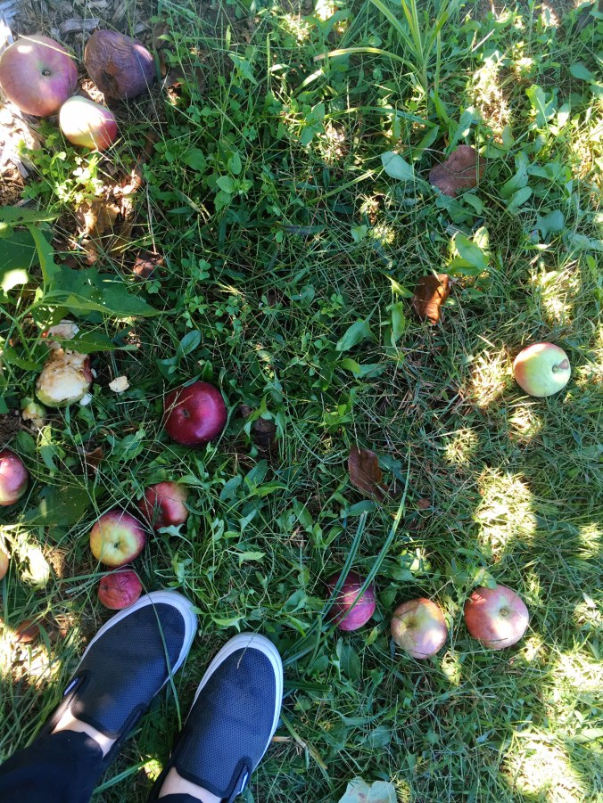 apple-picking-fall-family-fun-in-fairfield-county-connecticut