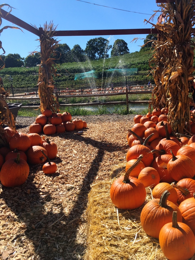 fairfield-county-pumpkin-patch-and-apple-picking