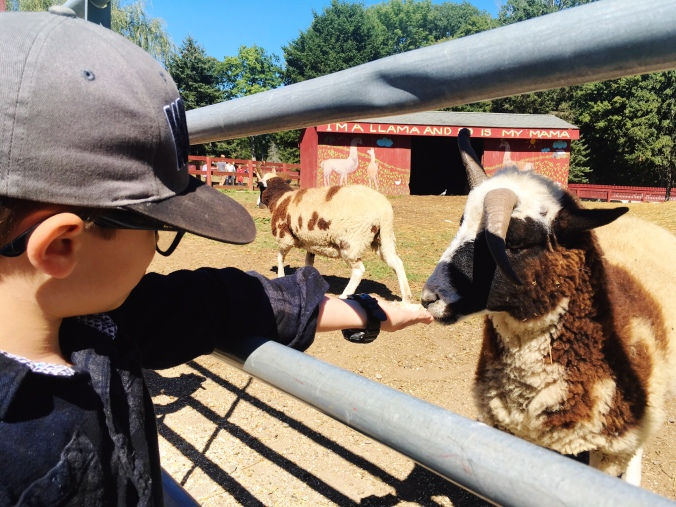 petting-zoo-autumn-in-new-england-connecticut