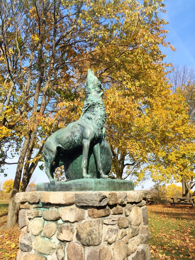 anna-hyatt-huntington-wolf-sculpture-collis-p-huntington-state-park-hiking-in-bethel-newtown-and-redding-ct-in-autumn-november-2-2016