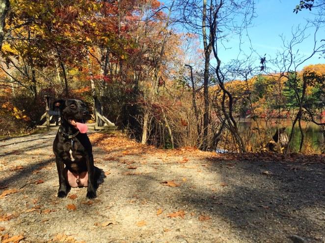 Dog Park Fairfield County Ct