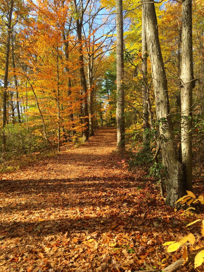 collis-p-huntington-trail-running-in-bethel-newtown-and-redding-ct-in-autumn-november-2-2016