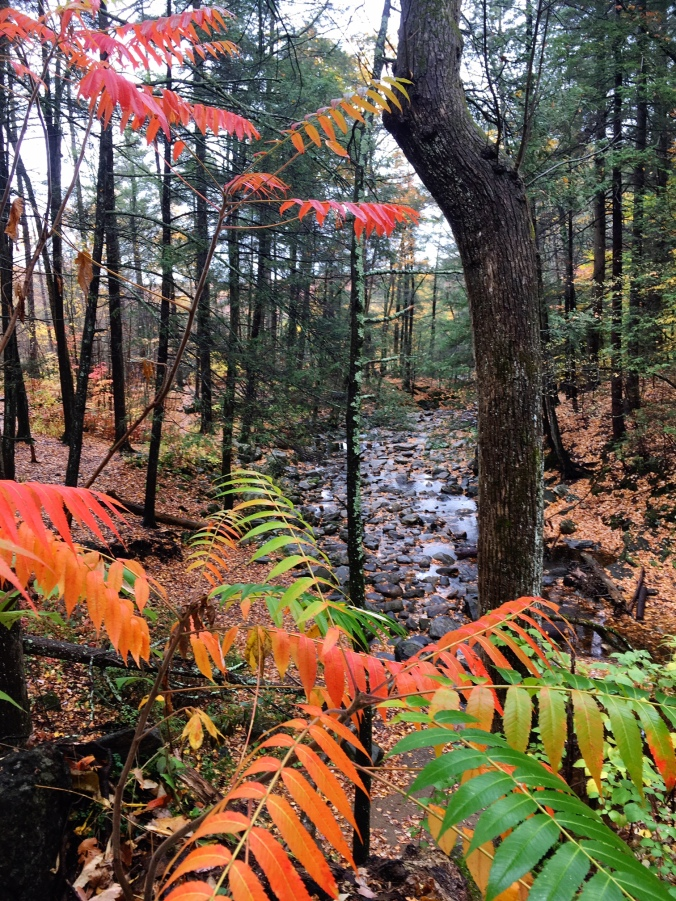fall-leaves-on-rainy-autumn-day-at-kent-falls-state-park-connecticut