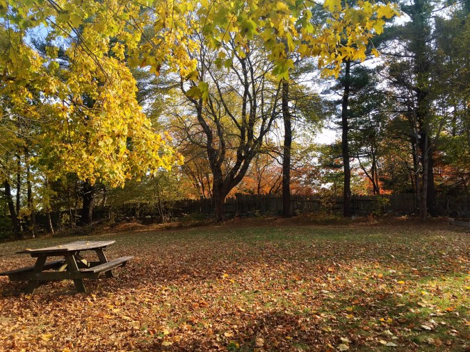 picnic-area-collis-p-huntington-state-park-connecticut-hiking-and-leaf-peeping-in-bethel-newtown-and-redding-ct-in-fall-november-2-2016