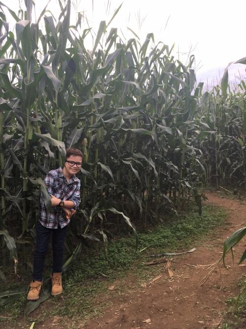 4-corn-maze-in-fairfield-county