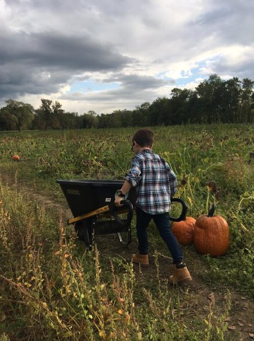 5-pumpkin-picking-in-fairfield-county