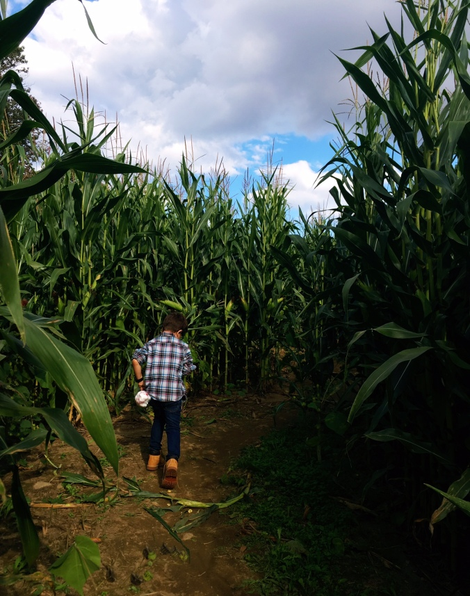 bring-your-dog-corn-maze-and-pumpkin-patch-in-fairifeld-county-ct