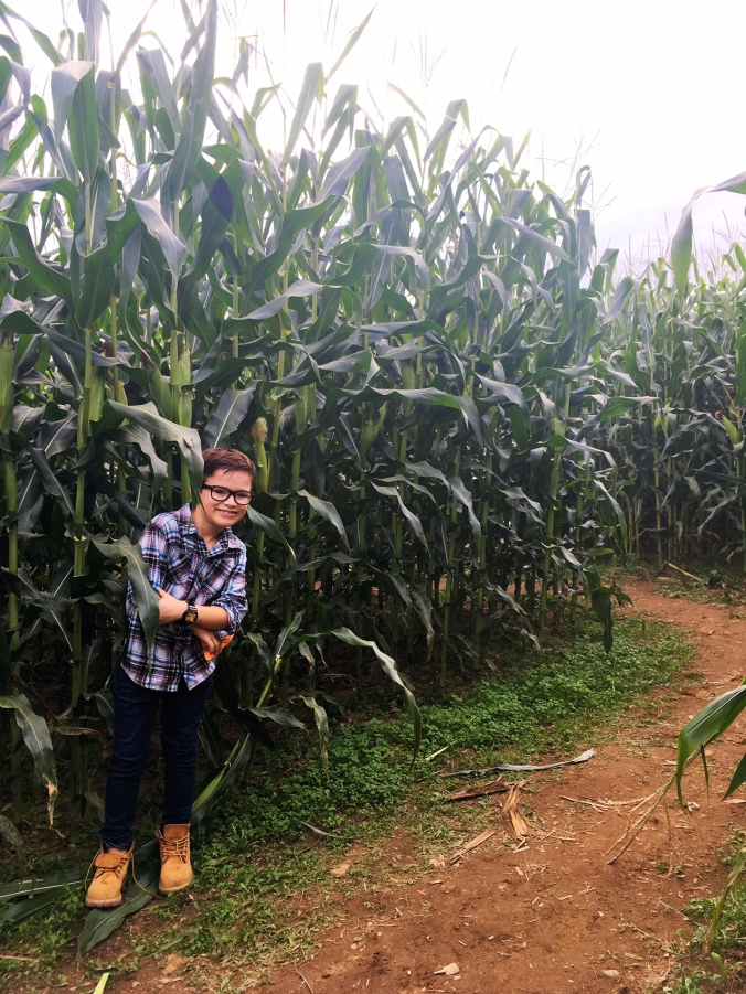 castle-hill-farm-corn-maze-in-fairfield-county-connecticut