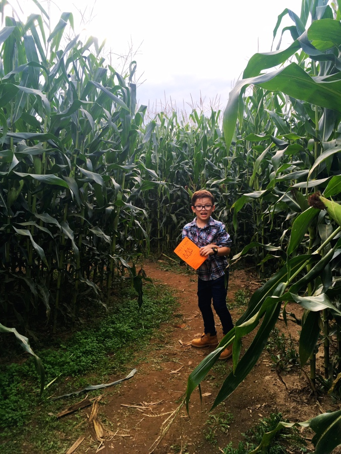 lost-in-a-corn-maze-newtown-fairfield-county-ct