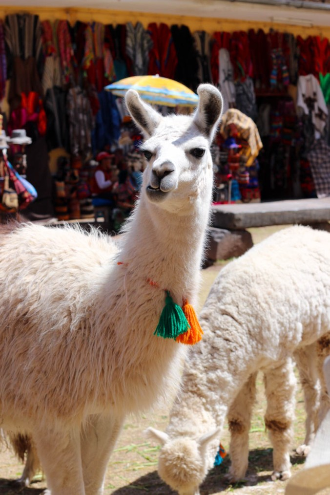 one-day-in-cusco-itinerary-horseback-to-sacsaywaman-alpacas-street-food-16