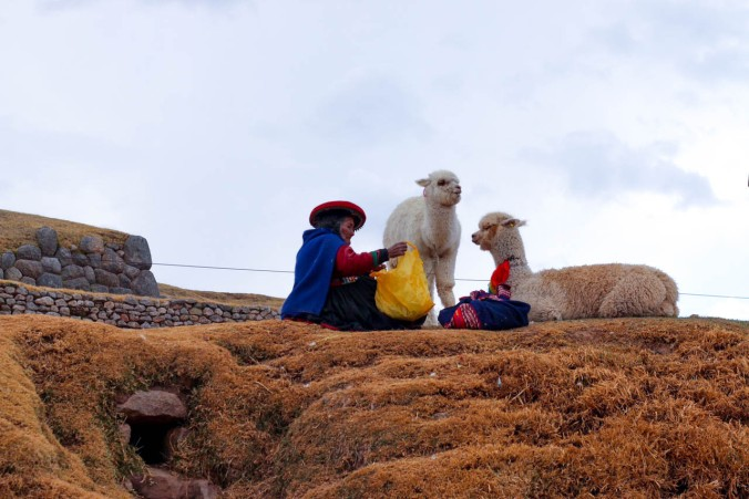 one-day-in-cusco-itinerary-horseback-to-sacsaywaman-alpacas-street-food-42