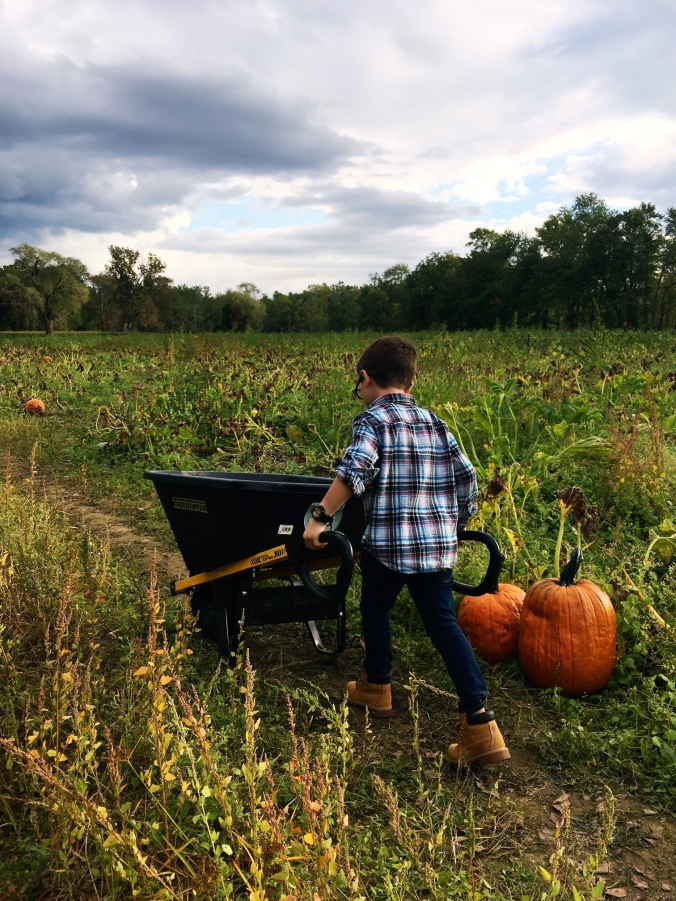pumpkin-picking-in-fairfield-county