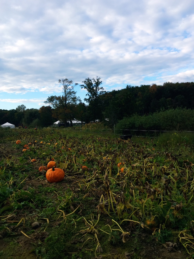 pumpkin-picking-with-a-dog-in-farifield-county-ct