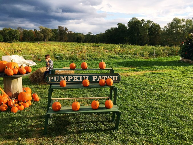 still-on-the-vine-pumpkin-patch-fairfield-county-ct-newtown